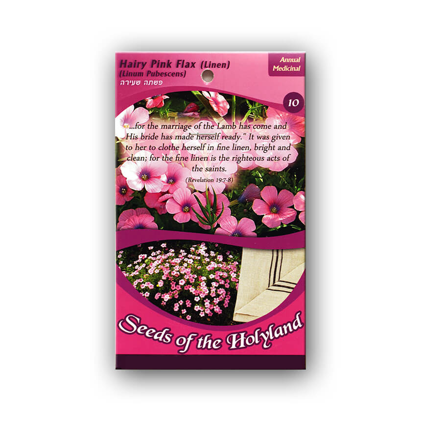 Hairy Pink Flax seeds1